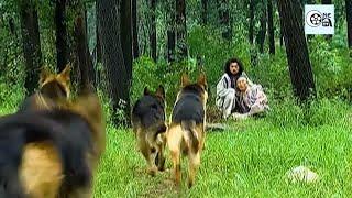 Trương Vô Kỵ Dùng Cứu Dương Thần Công 1 Chưởng Hạ Gục 4 Con Chó Ngao Tây Tạng | Ỷ Thiên Đồ Long Ký