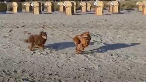 Ostsee Timmendorfer Strand mit Hund