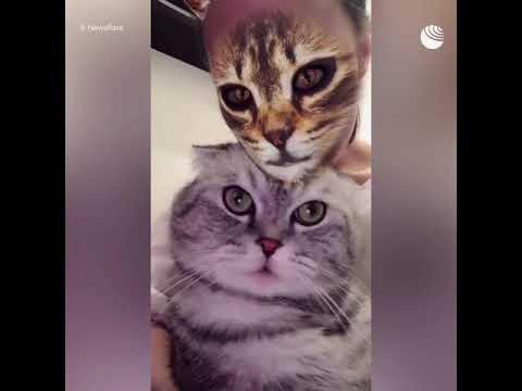 Реакция котов на преображение хозяев