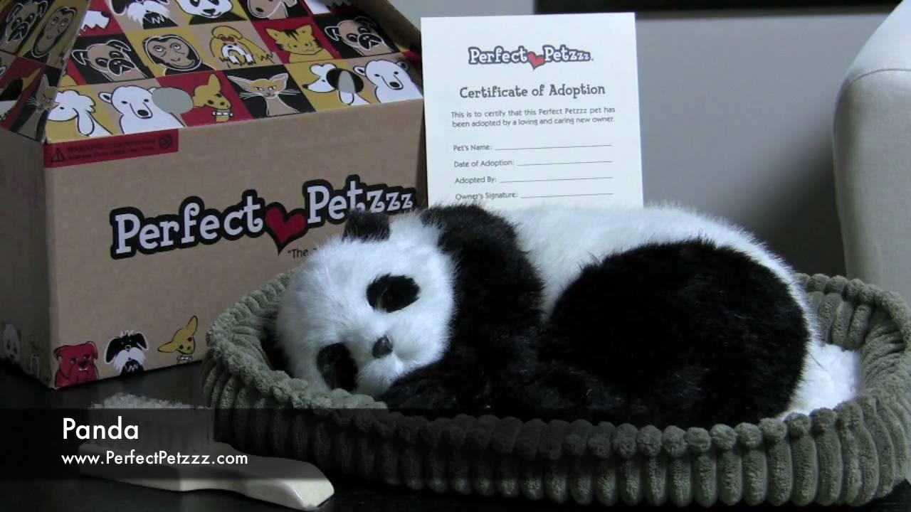 Perfect Petzzz Panda Youtube