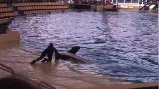 Лоро Парк - любительское видео. Tenerife 2012(, 2012-05-09T22:33:09.000Z)