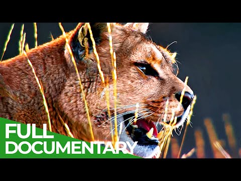 Wild Journey – Chile: Country of Contrasts | Free Documentary Nature