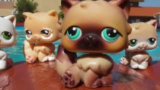 LPS: Обзор персидских кошек / Persian cats