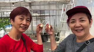 JPN19414N 諏訪峡 寶川溫泉 thumbnail