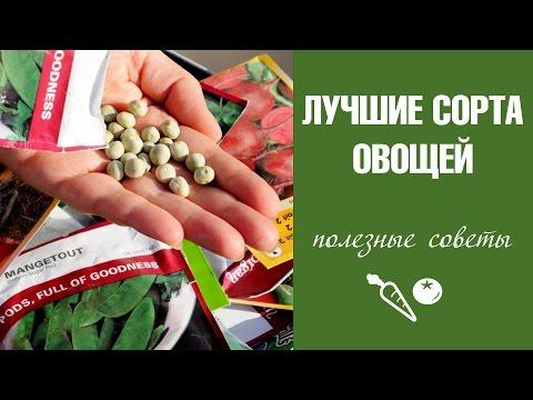 Лучшие сорта семян овощей - выбираем семена томатов, огурцов, укропа и петрушки на следующий сезон
