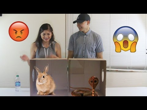 WHAT'S IN THE BOX CHALLENGE!!! LIVE ANIMALS