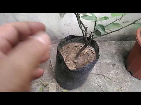 Container Gardening :