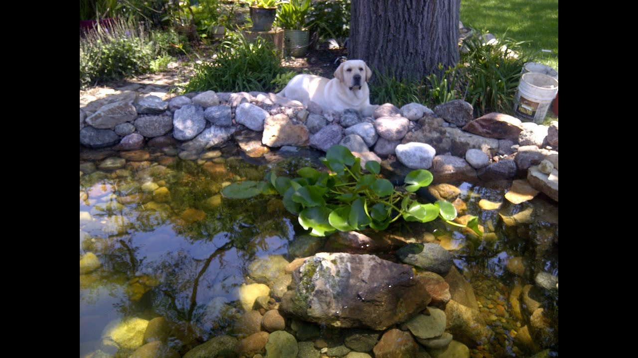Building a backyard koi pond by hand youtube for Backyard koi fish pond