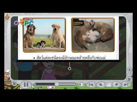 การถ่ายทอดลักษณะทางพันธุกรรมของสัตว์ - สื่อการเรียนการสอน วิทยาศาสตร์ ป.3