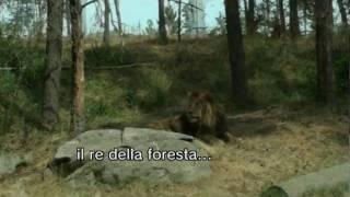 allo zoo safari vicino a stoccolma (Kolmården)