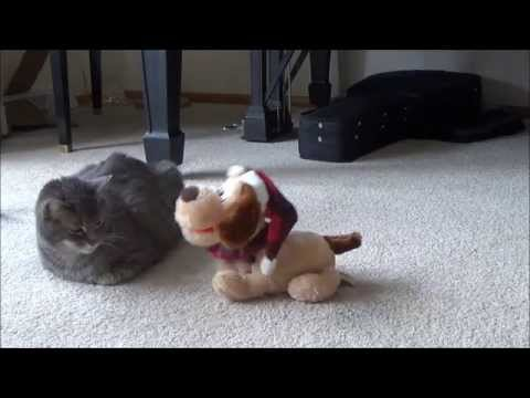 Cat vs Musical Christmas Dog: The Legacy Continues