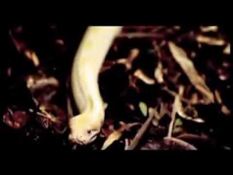 Idayu - Paluan Rindumu - Official Music Video