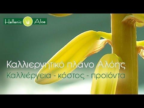 Καλλιέργεια Αλόης