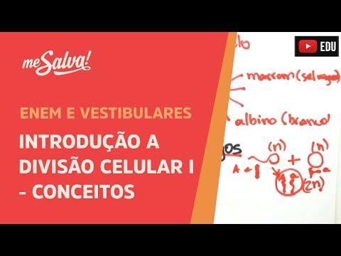 Me Salva! CIT23 - Citologia - Introdução a divisão celular 1 - Conceitos