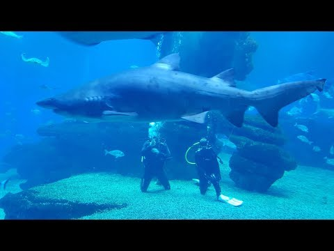 Diving With Sharks Palma Aquarium Mallorca