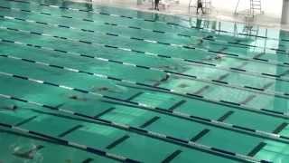 2014新界小學學界總區女子乙組50米蛙决賽 破紀錄