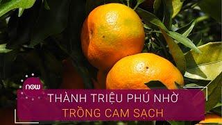 Thành triệu phú nhờ...bí quyết trồng cam Xã Đoài sạch | VTC Now