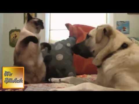 клипы с кочками