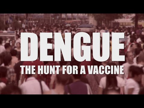 DENGUE: THE HUNT FOR A VACCINE