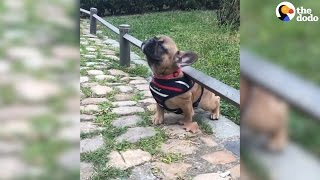 Determined Dog Gets What She Wants