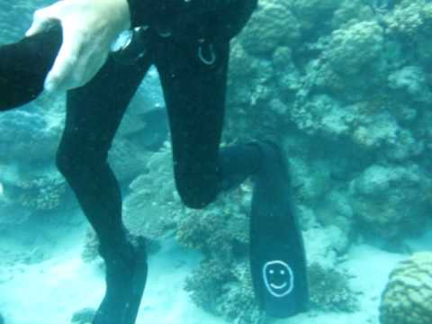 HUGE!!! Sea Cucumber In The Coral Sea, Australia