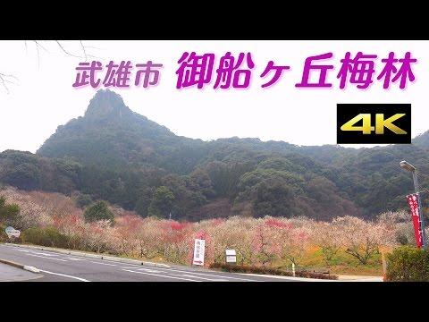 【4K】武雄市御船ヶ丘梅林