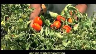 ACDI/VOCA-Egypt: Integrating Small Farmers into the Value Chain, Part 3 of 4