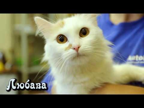 Кошки ищут дом! Пожалуйста, сделайте репост   помогите найти хозяев!