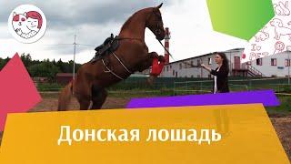Донская лошадь на ilikepet