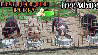 Rottweiler Dog | German Shepherd Puppies | American Bully | DOG FOOD | Doggyz World