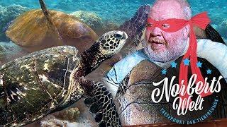SCHILDKRÖTEN oder HERO TURTLES? | Einstieg, Unterschiede und Fakten | NORBERTS WELT | Zoo Zajac