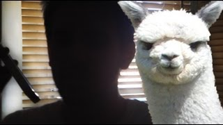 I Need a Guard Alpaca Thumbnail