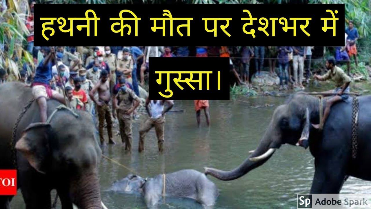 Elephant attack in Valanchery Kerala Latest News - YouTube  Kerala Elephant Attack Youtube