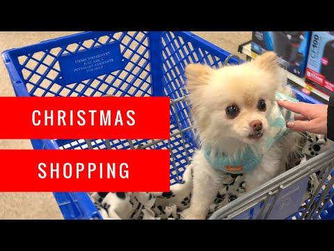 shopping-at-petsmart-for-christmas-|-puppy-haul