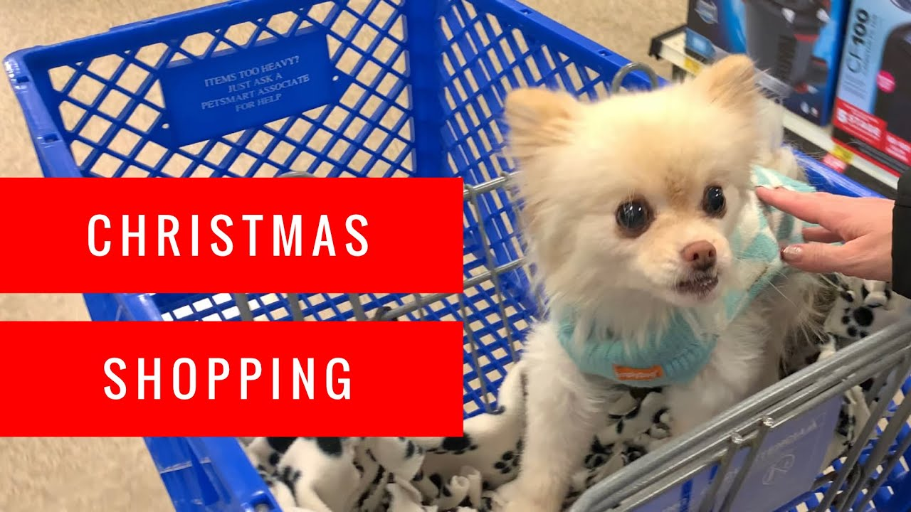 Petsmart Christmas Hours.Shopping At Petsmart For Christmas Puppy Haul