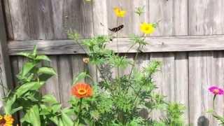 Summer Butterfly Garden Thumbnail