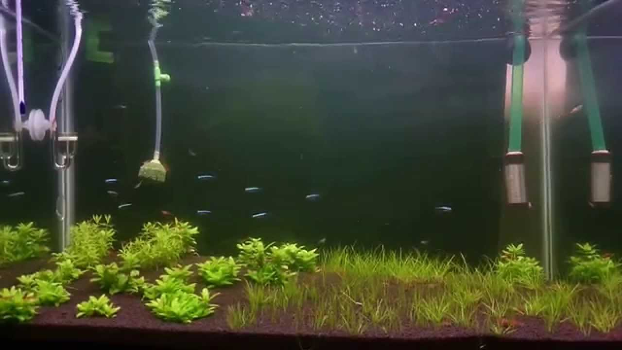 Jebao aquarium external fish tank filter review - 4 Day After Change New Filter Jebao 503