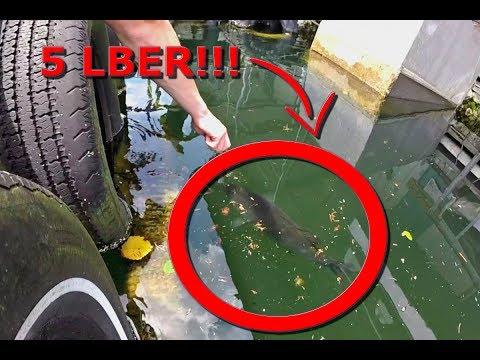 Feeding Giant PET Bass on a PUBLIC Dock