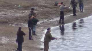 Рыбалка ловля хариуса красивой и мощной рыбы на берегах реки Енисей Лесосибирск
