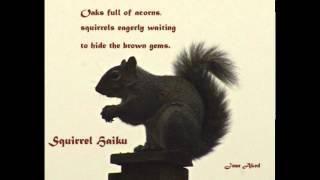 Squirrel Haiku poetry by Jean Aked