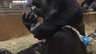First-Time Gorilla Mom Can't Stop Showering Newborn With Kisses
