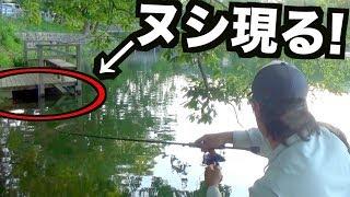 「ぬし」が居るとは知らずに釣りをしたらリールが悲鳴をあげた!! thumbnail