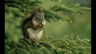 Урок 31 Природознавство 1 клас. Якими бувають тварини?
