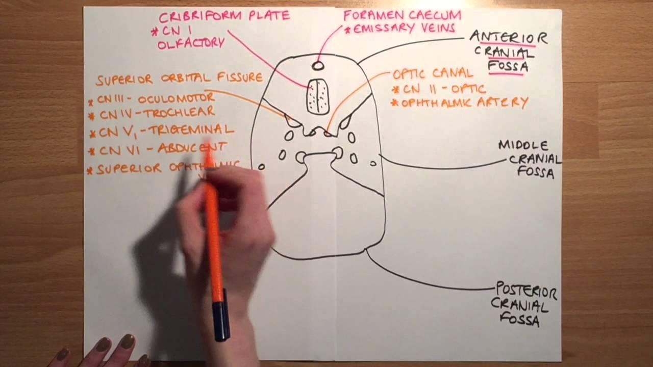 how to find sacral foramen