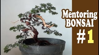 Cara Membuat Bonsai #1 by Tedy Boy Bonsai of Indonesia