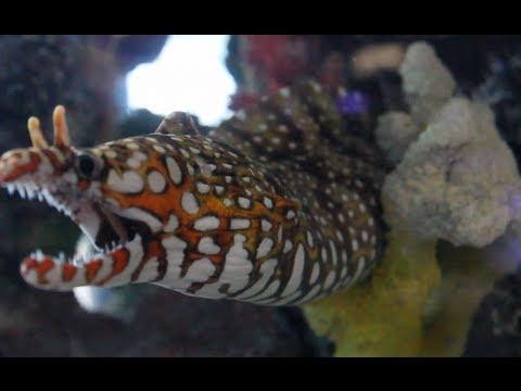 Total Aquariums - L.I New York [Local Fish Store Travel Ep. 4]