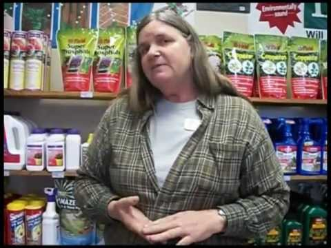 Insect Prevention With Systemic Insecticides 2/25/12