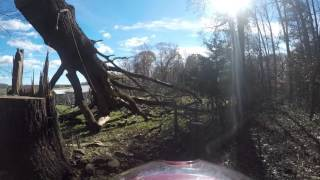 Grubb Tree tree felling