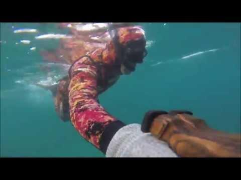 CSM Martinique Thom 04 sud caraibe grosse carangue barracuda