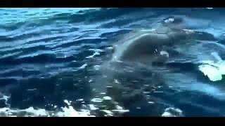 Dokumentation Deutsch   Buckelwale Wanderer Der Weltmeere Doku By077